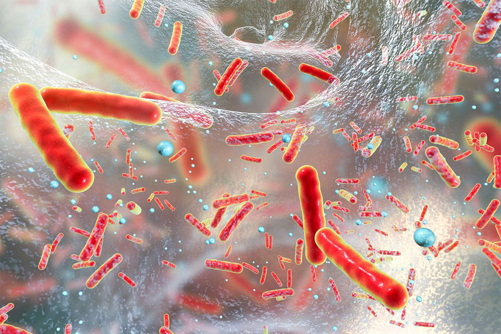 conf_microbiote_bacteries
